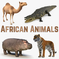 african animals model