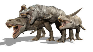 3D fighting tyrannosaurs