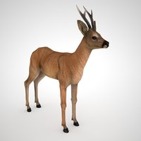 roe deer male - model