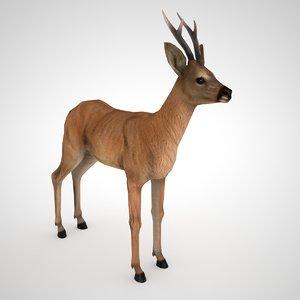 roe deer male - model