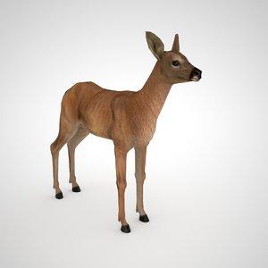 3D roe deer female - model