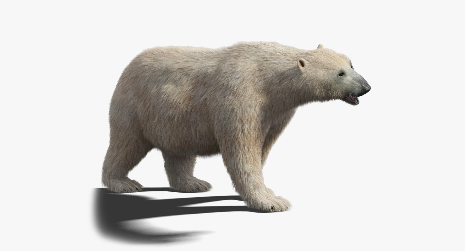 3D polar bear fur rigged model