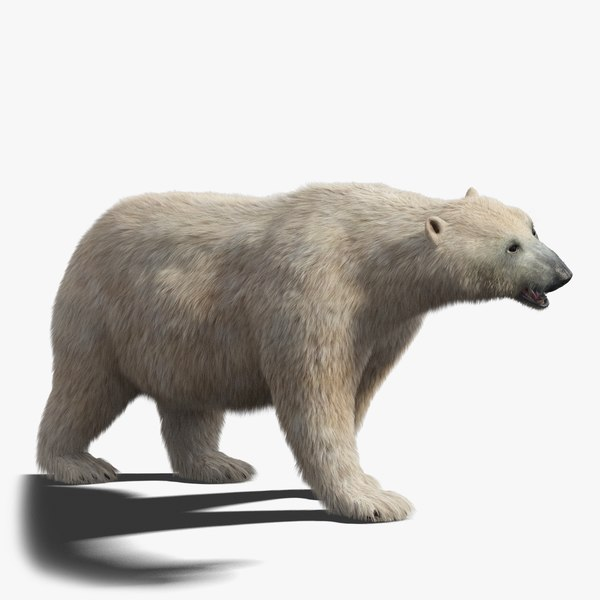3D polar bear fur rigged model