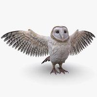 barn owl 3D