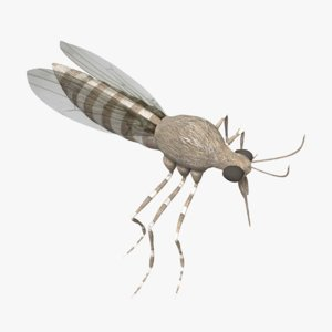 3D mosquito model