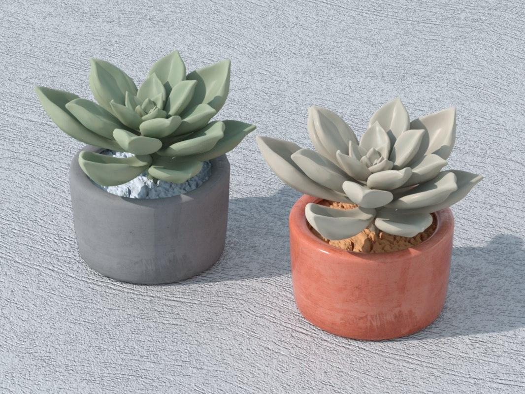 3D succulent plant suculenta