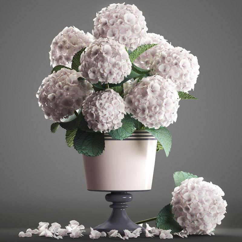 3D bouquet white hydrangea model