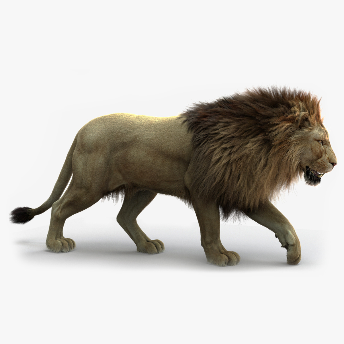 3D lion rigged fur model