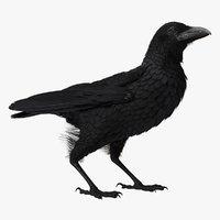 raven corvus standing pose 3D