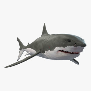 modeled rigged shark model
