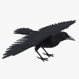 black crow model