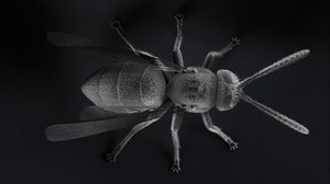 wasp insect 3D