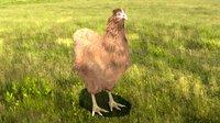 3D chicken chick model