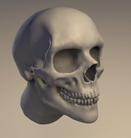Skull head sculpt