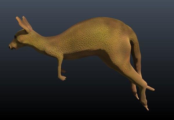kangaroo 3D model