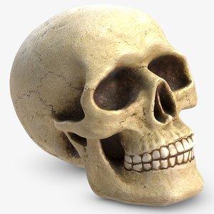 skull v-ray 3D model