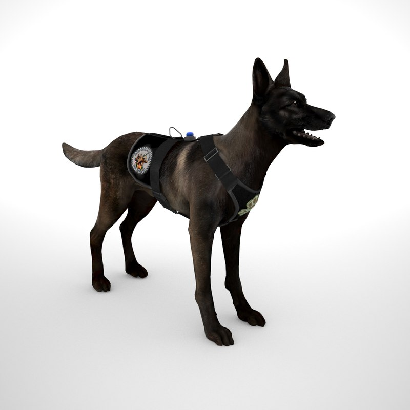 3D model belgian malinois dark fawn