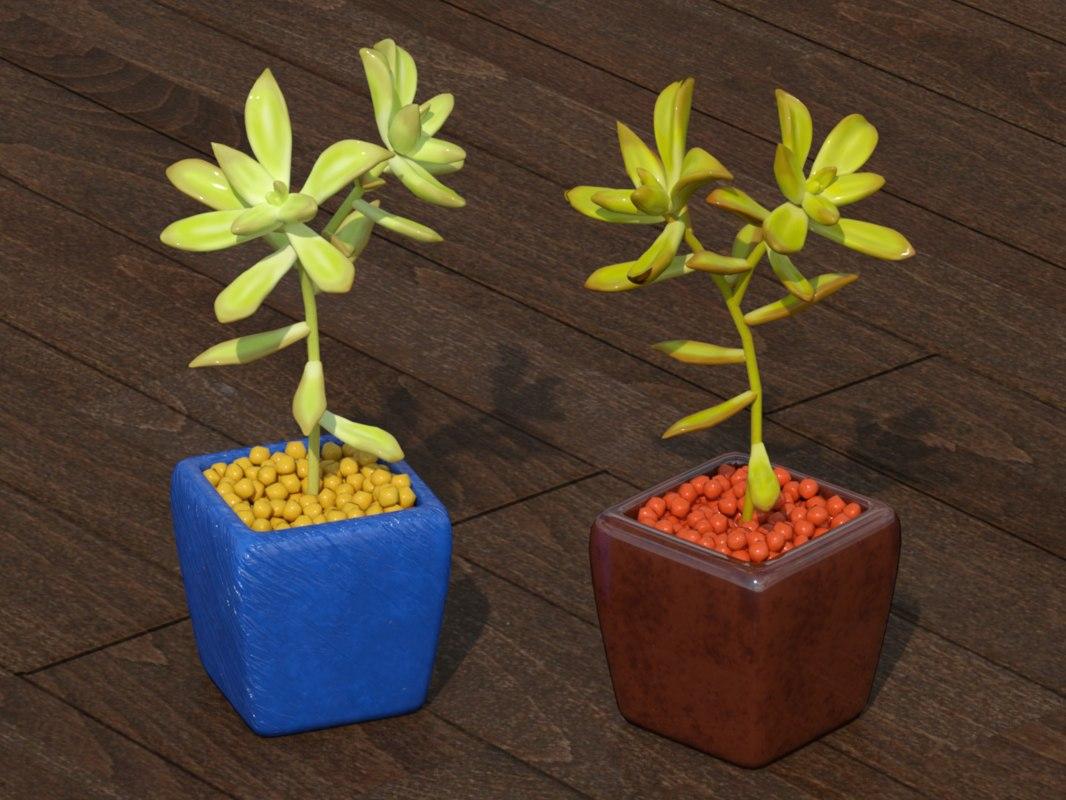 3D succulent plant