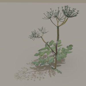 3D heracleum hogweed hog weed
