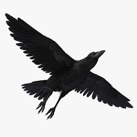 3D raven flying model