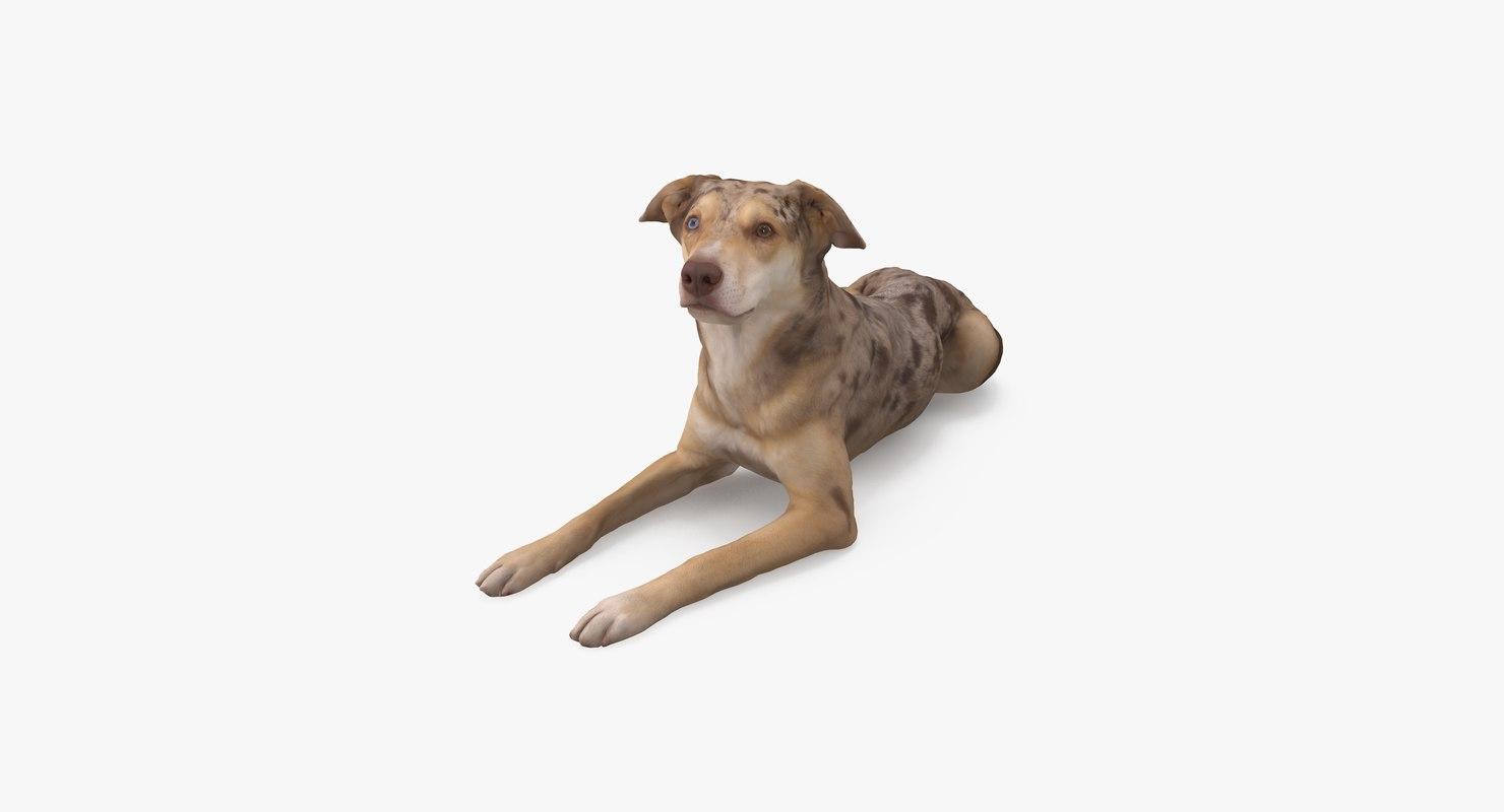 3D dog metis model
