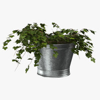3D bucket ivy model
