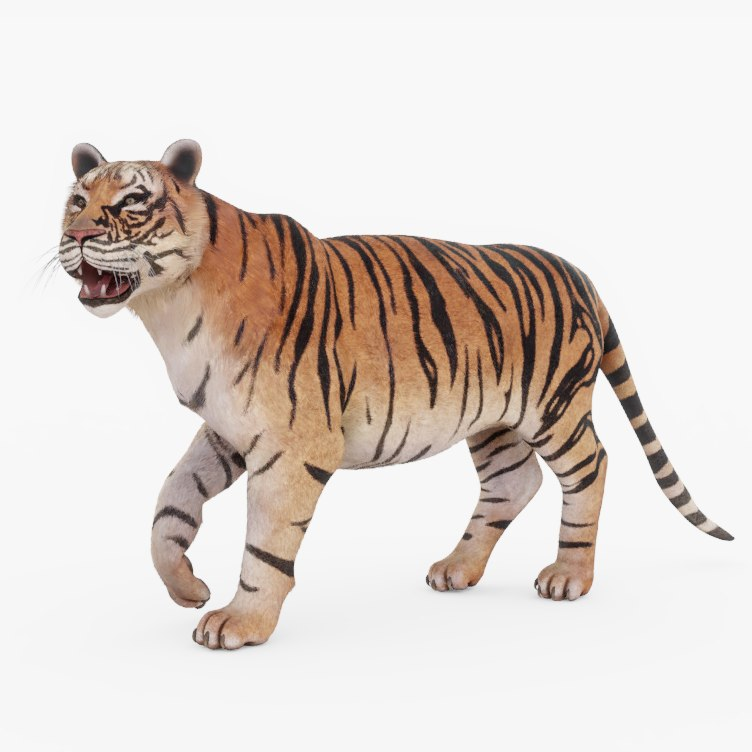 3D Rigged Tiger Model