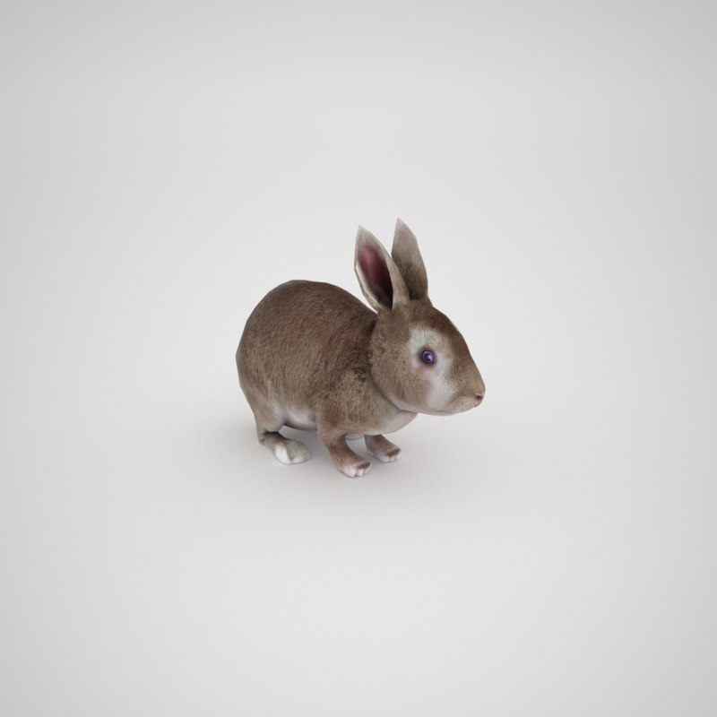 3D rabbit baby model