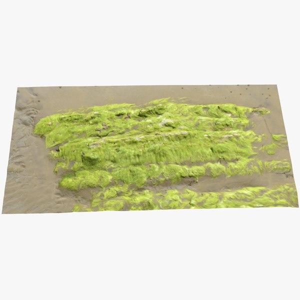 3D seaweed rock