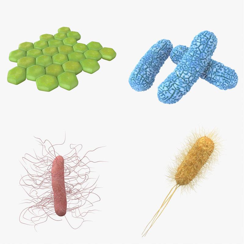 bacteria pack model