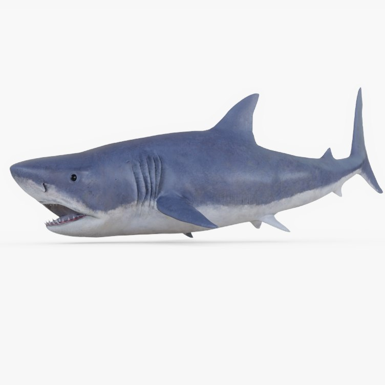 great white shark rig 3D model