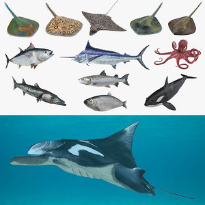 fishes 3 3D model
