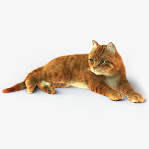 cat rigged fur 2 3D model