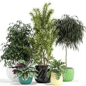 3D model plants 111