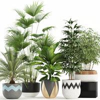plants 113 3D model