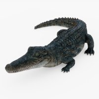 Alligator Rigged 01