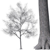 realistic tree leaves 3D