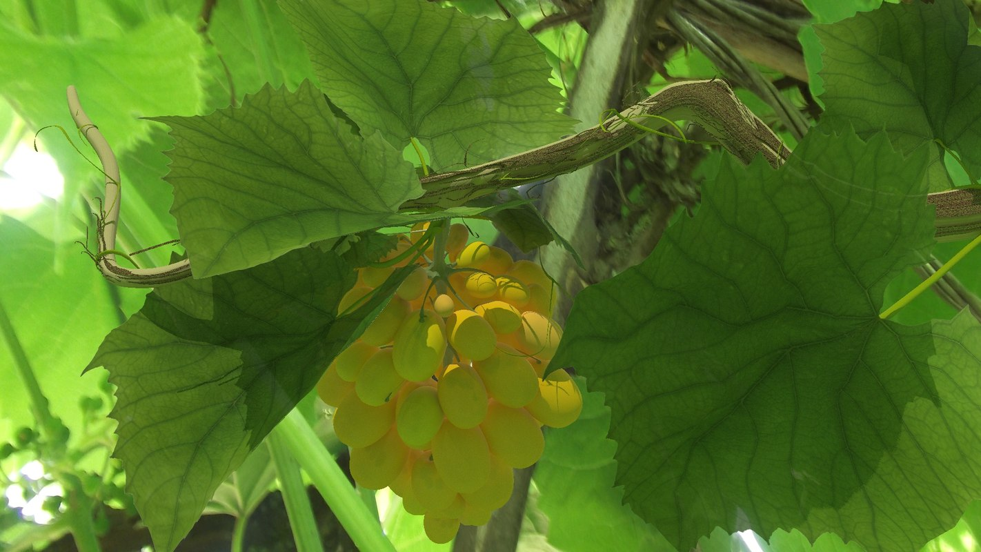3D grapes bunch