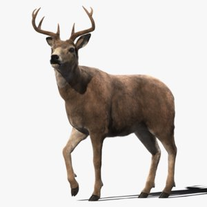 3D deer rigging animation fur hair model