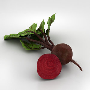beetroot beet root model