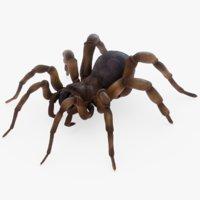 trapdoor spider model