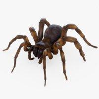 3D rigged trapdoor spider