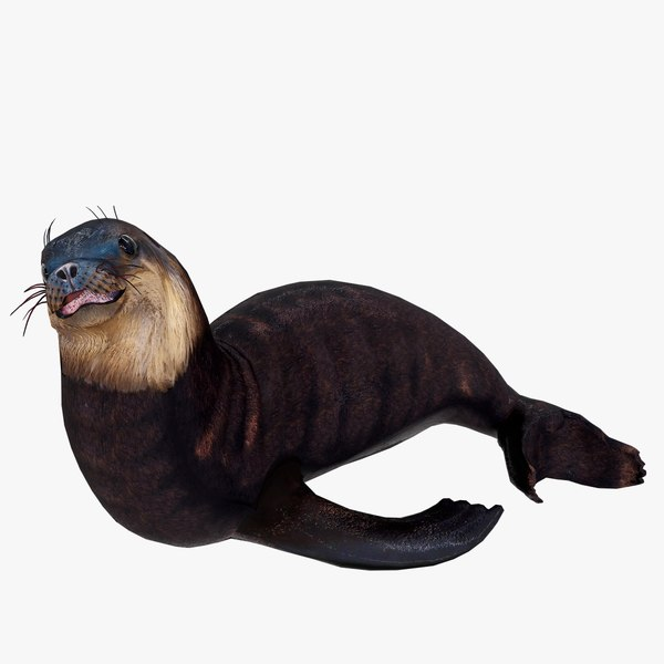 3D realistic sea lion rigged model