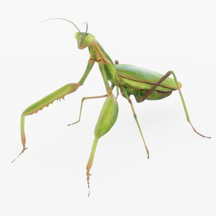 praying mantis rig 3D model