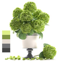 bouquet green hydrangea 3D model