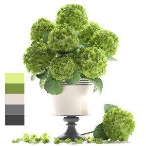 bouquet green hydrangea 3D model