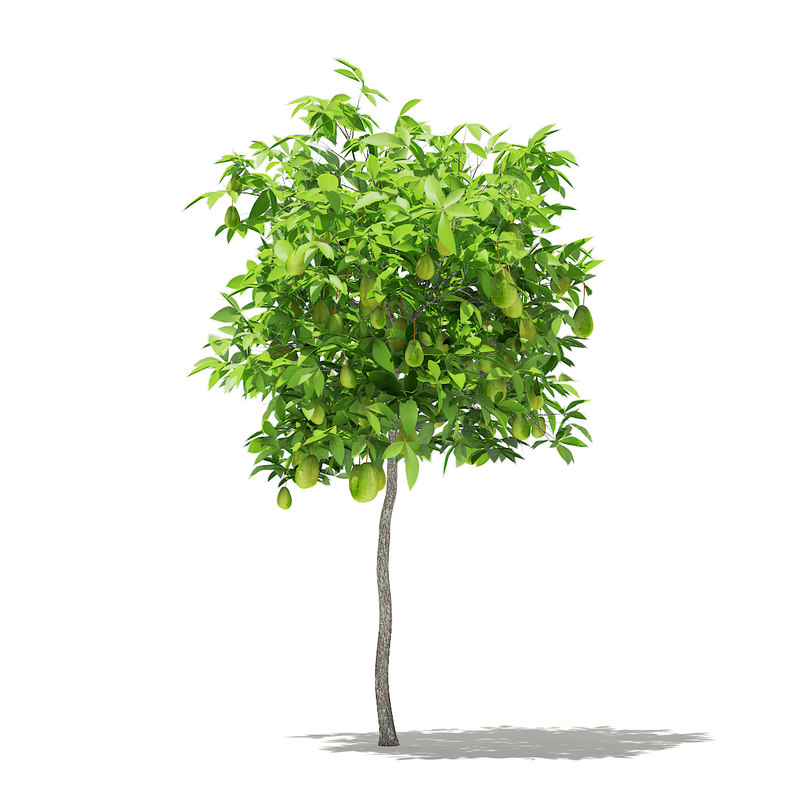 3D avocado tree fruits 1 model