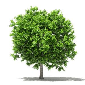 3D avocado tree 3 8m