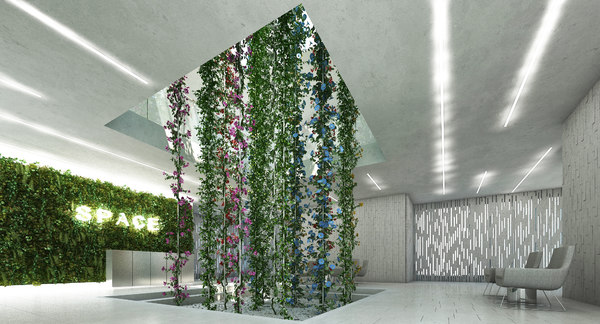 3D model plant morning glory