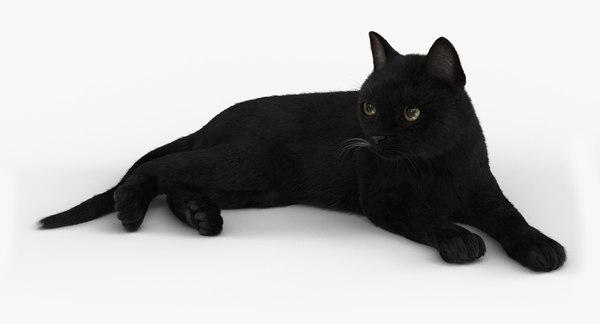 cat rigged fur 2 3D